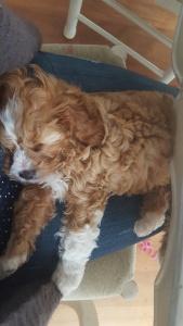 Puppy Blanket